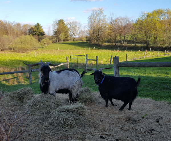 Farm & Goat Photos
